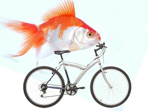 fish-bike