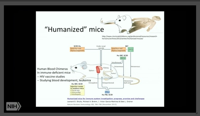 Image: Humanized mice Chimeras for cancer research (Image credit: Screen from NIH workshop)