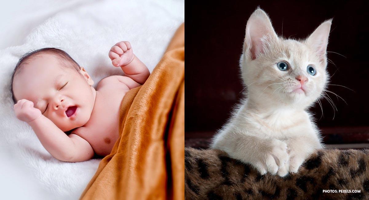 abortion, kittens, preemie