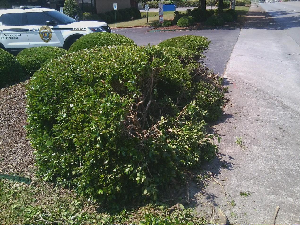 shredded bush