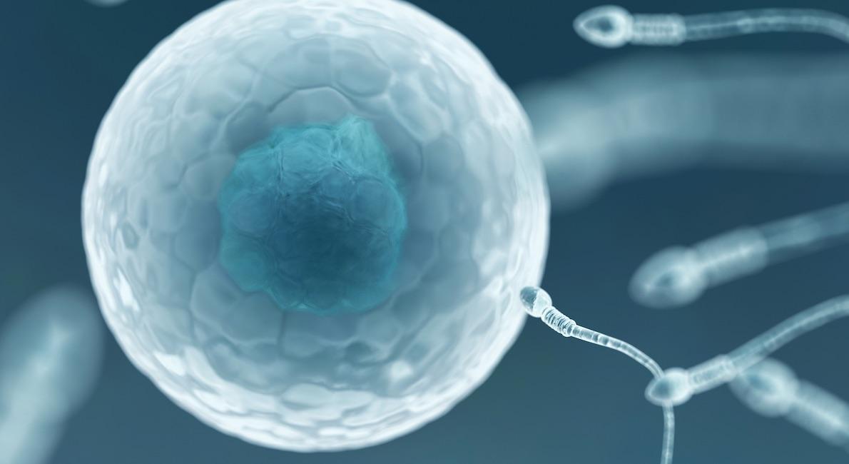 Egg and sperm, artwork