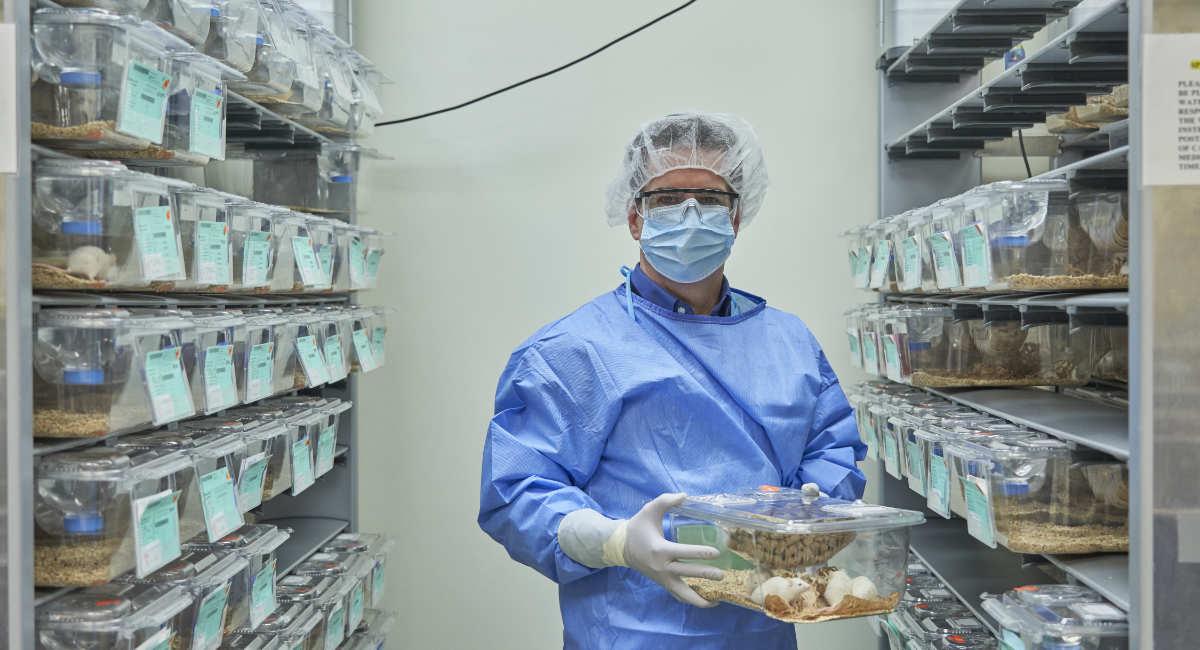 humanized mice, fetal tissue